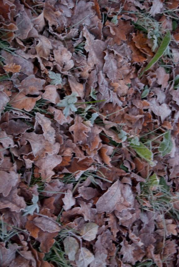 Frostig lövmatta