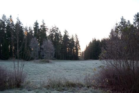 Frostig vy