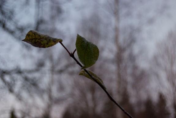 Löv i fokus