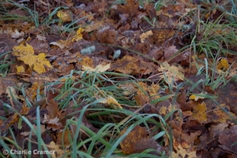 frost-grasmatta